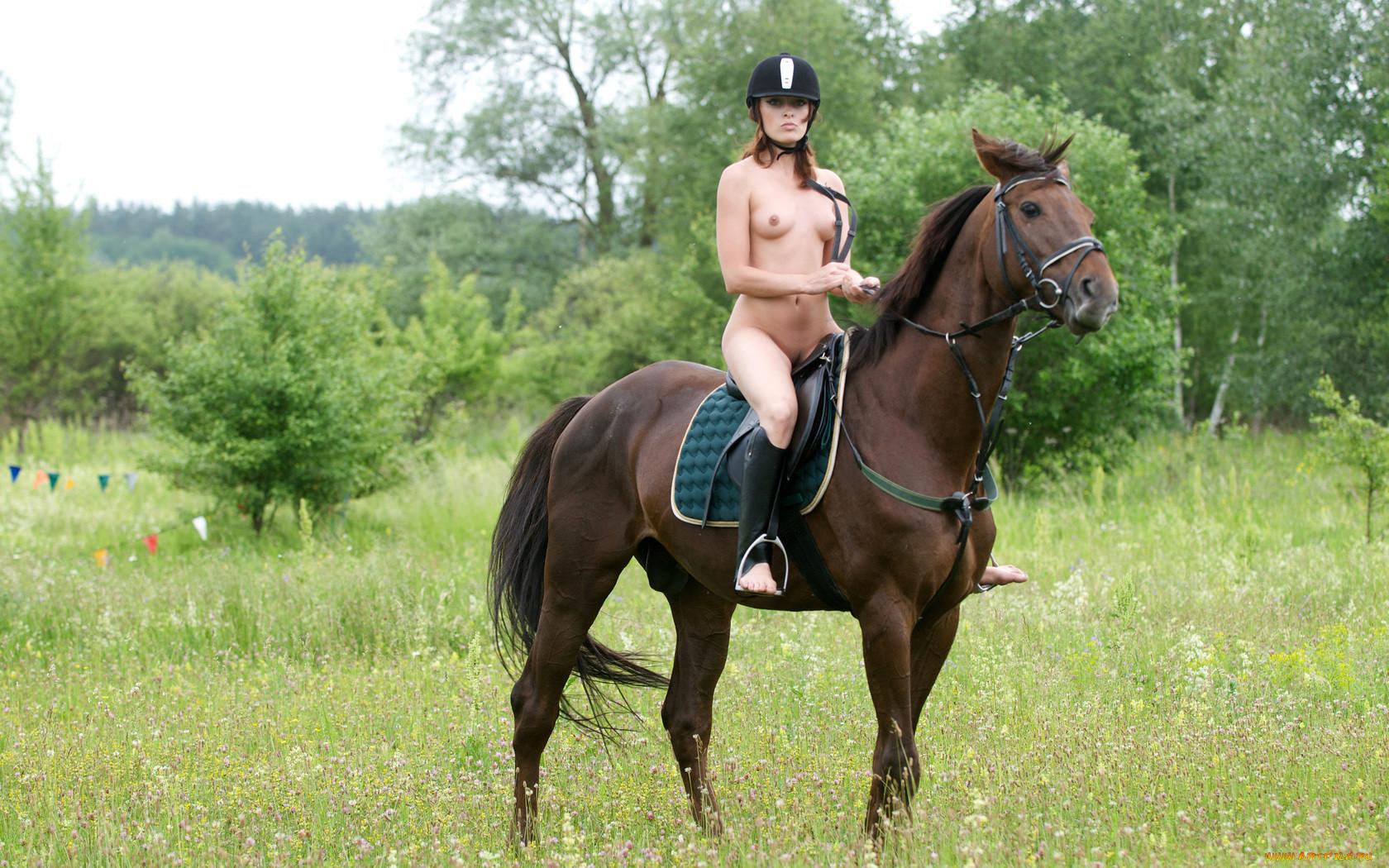 Рисунок деревянной лошади 4